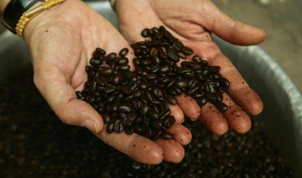 Conscious Coffee Culture